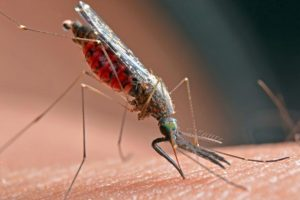 Navy Researchers Making Progress on a Vaccine for Malaria