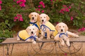 services pups