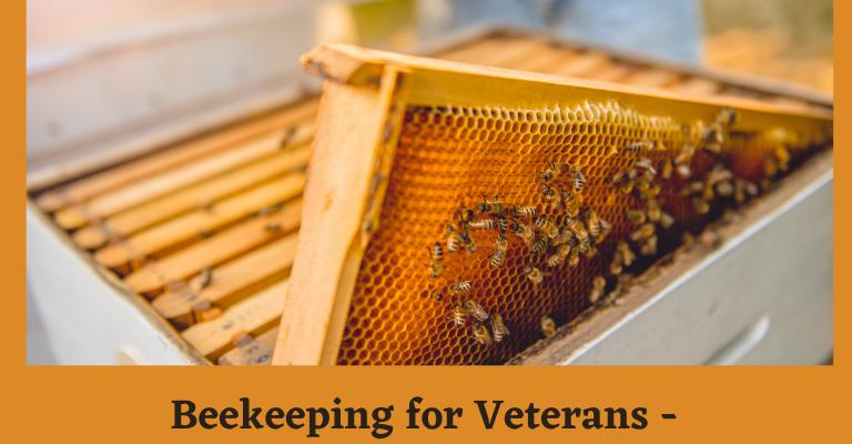 Beekeeping for Veterans