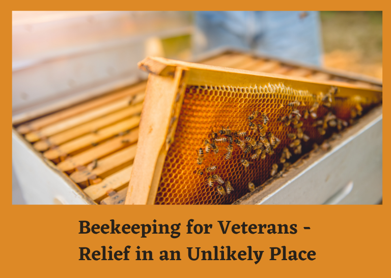 Beekeeping for Veterans