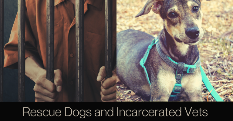 Rescue Dogs and Incarcerated Vets Help Each Other Heal